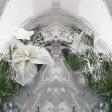 White Iris-1 (1/5)