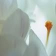 Serenity (Ed. 5/6)
